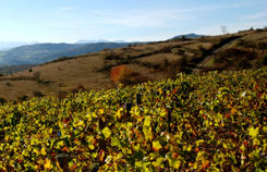 vignes et Monts du Sancy